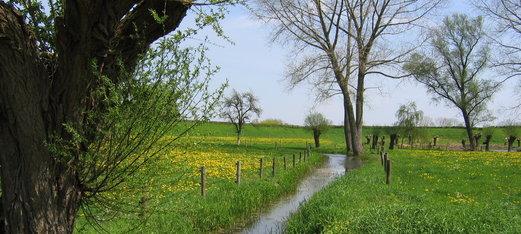 Lente in de IJsselvallei 2006 024