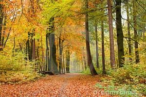 voetpad-de-herfstbos-16783429